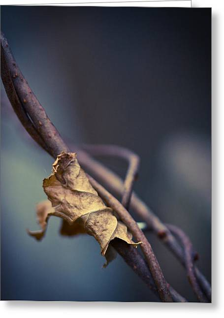 Vine Leaves Photographs Greeting Cards - Trapped Greeting Card by Shane Holsclaw
