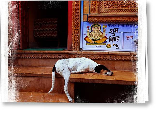 Doggies Greeting Cards - Travel Sleepy Happy Doggie Jaisalmer Fort India Rajasthan Greeting Card by Sue Jacobi