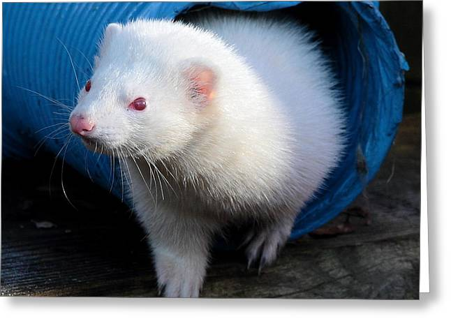 White Ferret Greeting Cards - Travelling the Tube Greeting Card by Nigel Espley