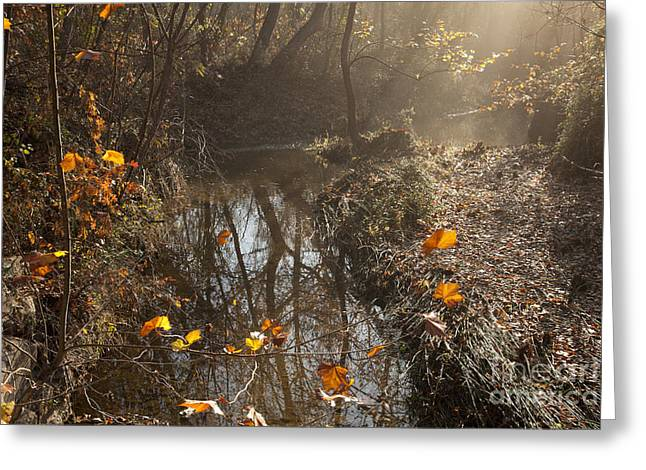 Travertine Creek In The Woods Greeting Card by Iris Greenwell