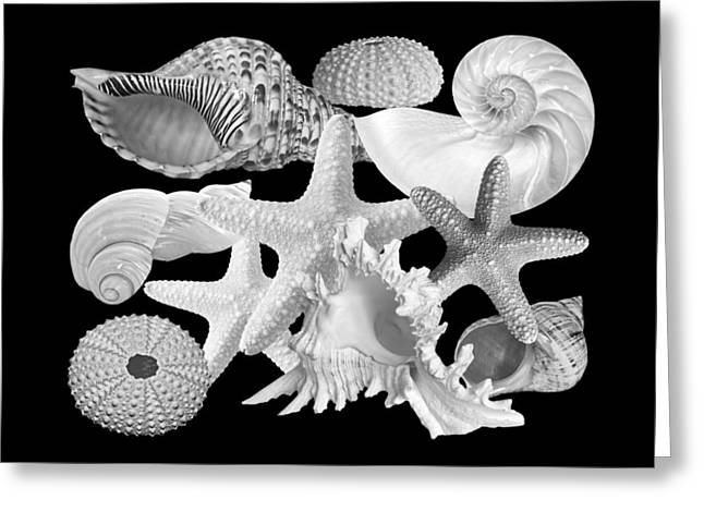 Seastar Greeting Cards - Treasures of the Deep In Black and White Greeting Card by Gill Billington