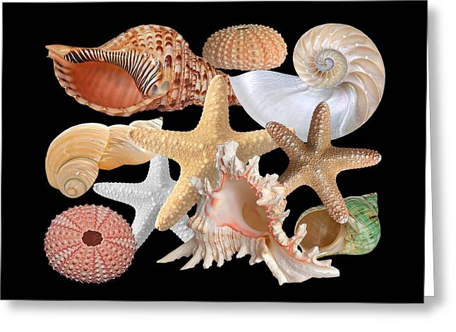 Seastar Greeting Cards - Treasures Of The Deep On Black Greeting Card by Gill Billington
