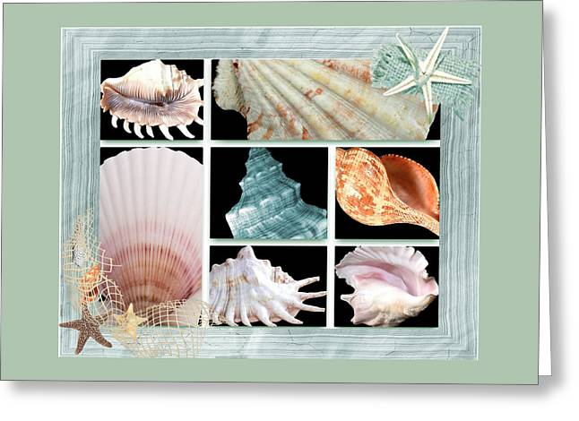 Seashell Picture Digital Greeting Cards - Treasures Of The Sea Greeting Card by Debra  Miller