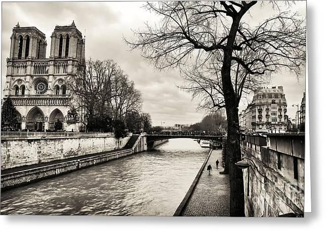 Paris At Night Greeting Cards - Tree Along the Seine Greeting Card by John Rizzuto