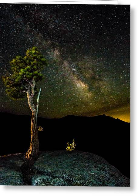 Mike Lee Greeting Cards - Tree Amongst the Stars Greeting Card by Mike Lee