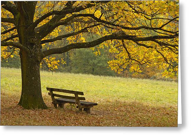 Empty Chairs Greeting Cards - Tree and bench in fall Greeting Card by Matthias Hauser