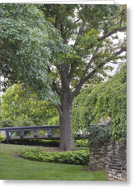 The Nature Center Greeting Cards - Tree and bridge at Wharton Center Greeting Card by John McGraw