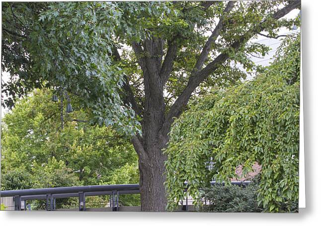 Tree and bridge at Wharton Center Greeting Card by John McGraw