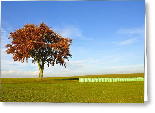 Hay Bales Photographs Greeting Cards - Tree and hay bales Greeting Card by Aged Pixel