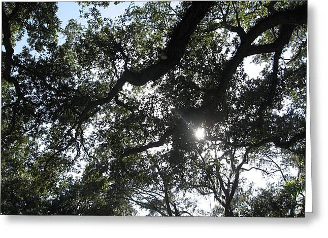 Horizontal Greeting Cards - Tree and Light in Vizcaya Garden Greeting Card by Mario  Perez