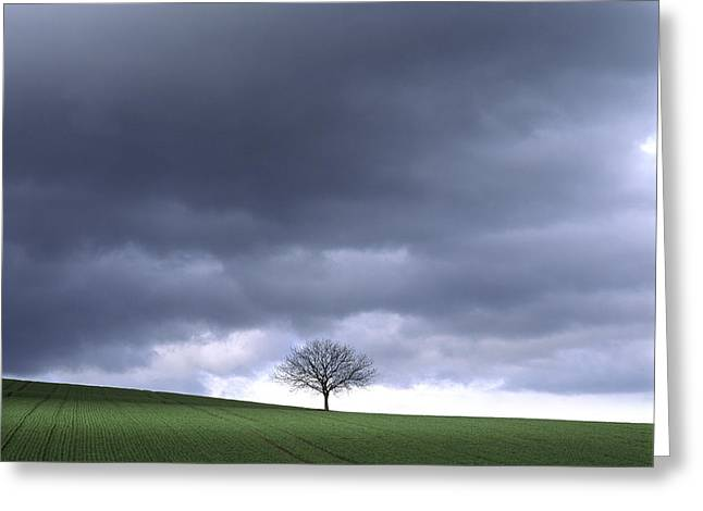 Cropland Greeting Cards - Tree and stormy sky  Greeting Card by Bernard Jaubert