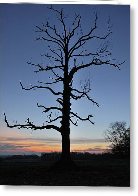 Gnarly Greeting Cards - Tree and Sunset Greeting Card by Wayne King