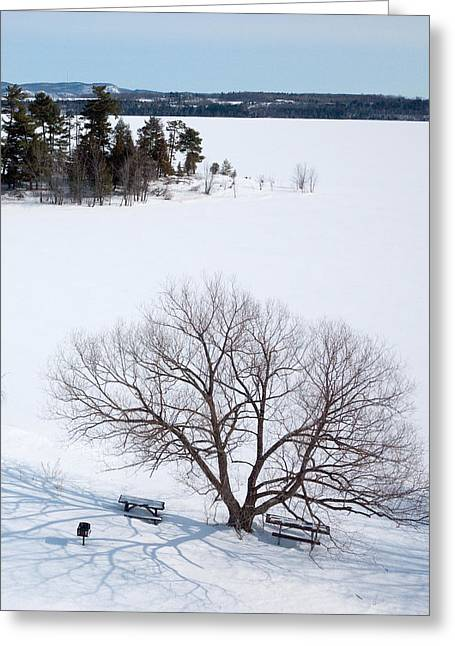 Kite Greeting Cards - Tree and the Point in Winter Greeting Card by Rob Huntley