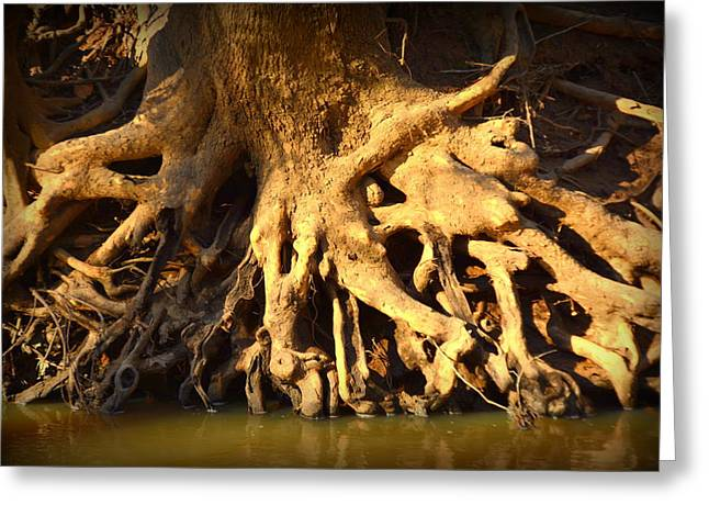 Tree Roots Greeting Cards - Tree Art Greeting Card by Lisa Wooten