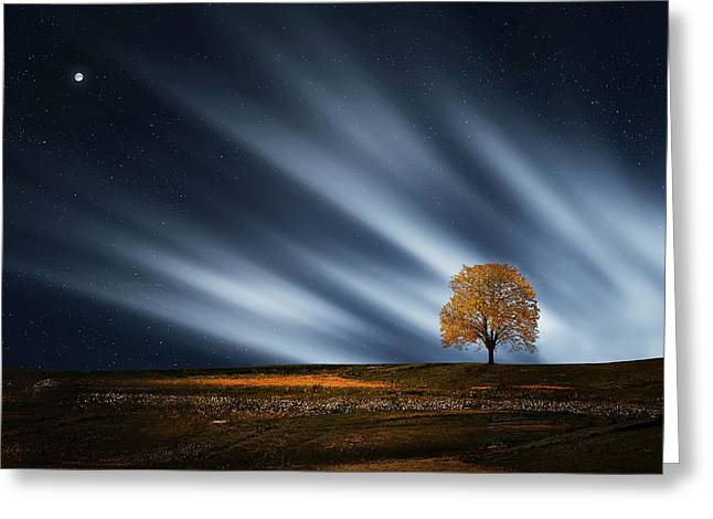 Incredible Colors Greeting Cards - Tree at night with stars Greeting Card by Bess Hamiti