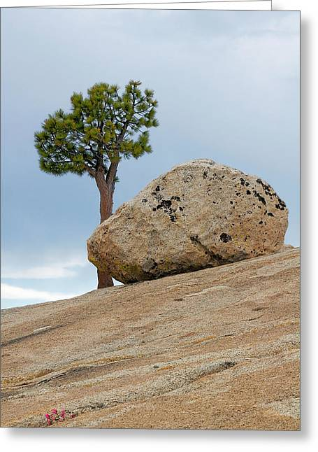 United Greeting Cards - Tree at Olmsted Point Yosemite National Park California Greeting Card by Christine Till