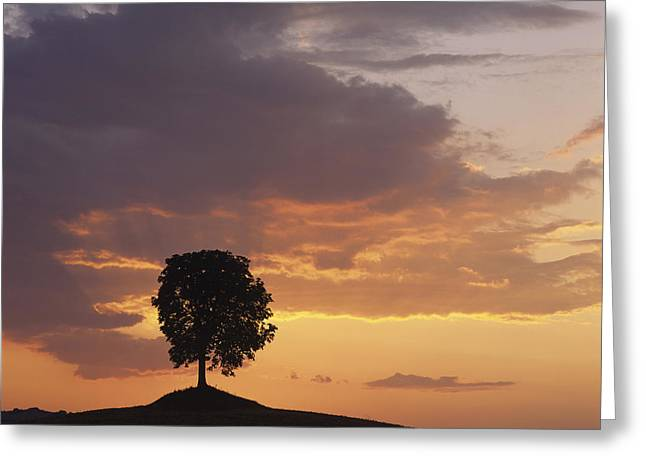 Backlit Greeting Cards - Tree at sunset Greeting Card by Bernard Jaubert
