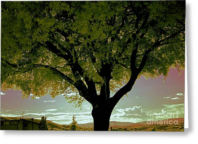 Red Photographs Greeting Cards - Tree At Sunset, Umbria, Italy Greeting Card by Tim Holt