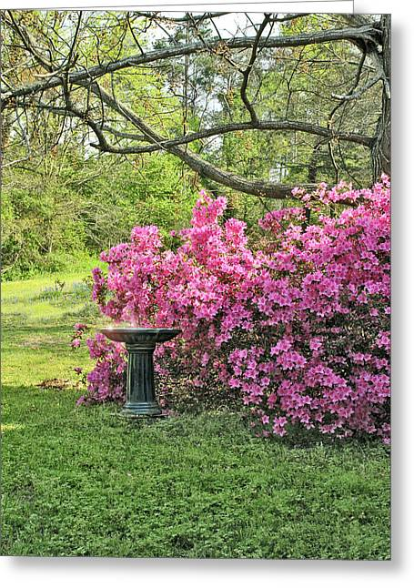 Tree Azalea And Birdbath Greeting Card by ARTography by Pamela Smale Williams