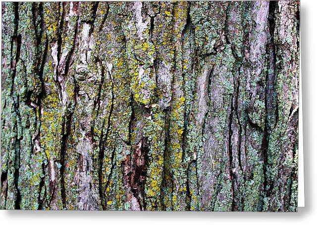 Tree Bark Detail Study Greeting Card by Design Turnpike