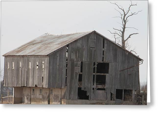 Red Roofed Barn Greeting Cards - Tree Barn Greeting Card by Minnie Davis