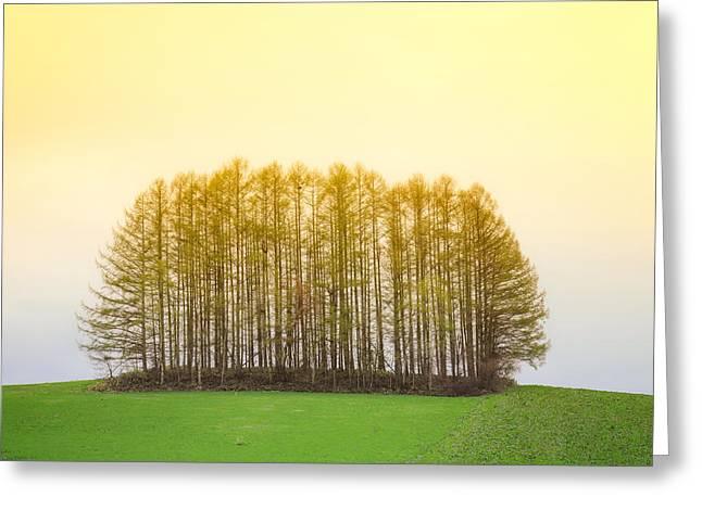 Matsu Greeting Cards - Biei famous tree Greeting Card by Hakai Matsu