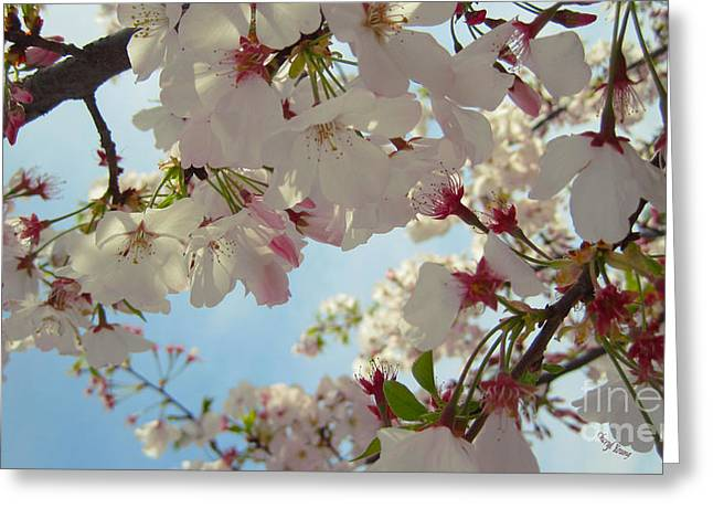 Boutique Design Greeting Cards - Tree Blossoms 2 Greeting Card by Cheryl Young