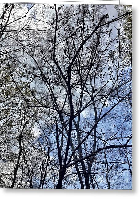 Tree Branch Art Greeting Card by Gina ODonoghue