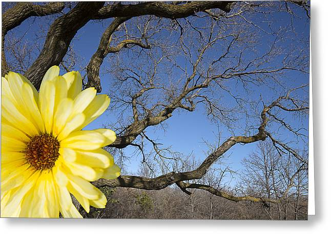 Bare Trees Greeting Cards - Tree Branches and Flower Greeting Card by Donald  Erickson