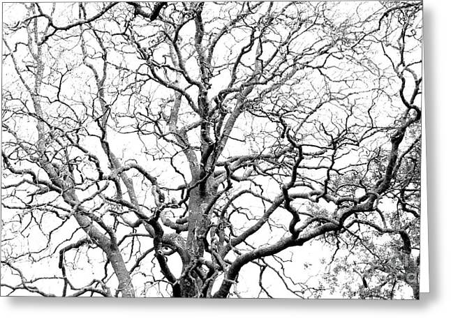 Bare Trees Greeting Cards - Tree branches Greeting Card by Gaspar Avila
