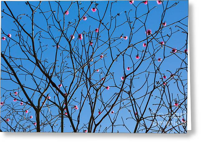 Flowers Miami Greeting Cards - Tree branches with flowers Greeting Card by Juan  Silva
