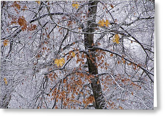 Snow Tree Prints Greeting Cards - Tree Branches with Winter Snowfall in Garfield Park Greeting Card by Randall Nyhof