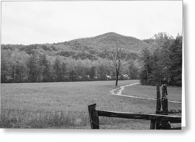 Tn Greeting Cards - Tree By Path In Mountain Field With Fence Greeting Card by Sherri Duncan