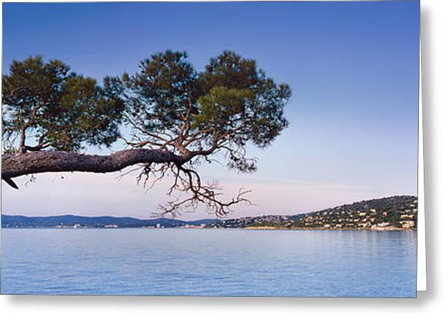 Azur Greeting Cards - Tree by the Sea - Cote dAzur Greeting Card by Rod McLean