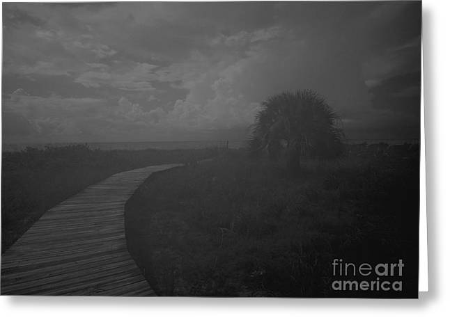 Grey Clouds Greeting Cards - Tree By The Sea Greeting Card by Jeff Breiman