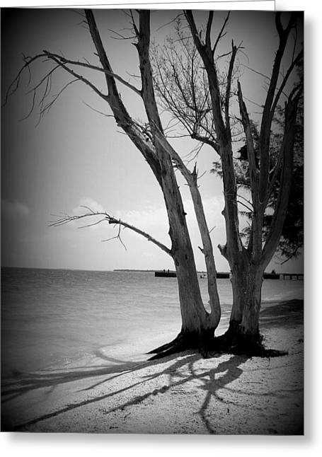 Laurie Perry Greeting Cards - Tree by the Sea Greeting Card by Laurie Perry