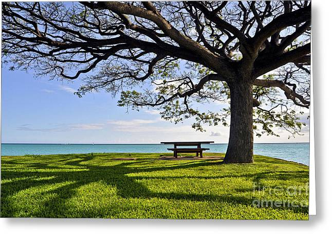 Hickam Greeting Cards - Tree Canopy Greeting Card by Gina Savage