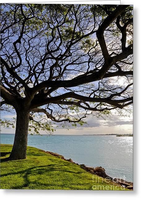 Hickam Greeting Cards - Tree Canopy II Greeting Card by Gina Savage