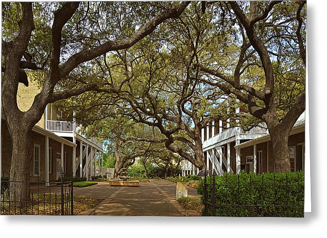 Healthy Greeting Cards - Tree canopy in San Antonio TX Greeting Card by Christine Till