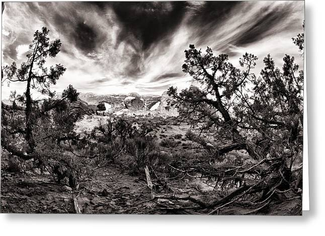 Colorful Cloud Formations Greeting Cards - Tree Chaos Greeting Card by Juan Carlos Diaz Parra