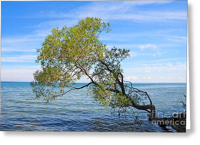 Willow Lake Greeting Cards - Tree Greeting Card by Charline Xia