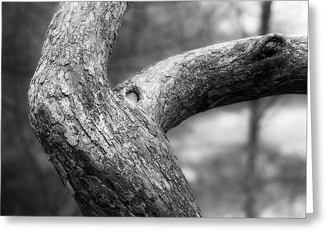 Petrifying Springs Greeting Cards - Tree Curve Greeting Card by Chris Tobias