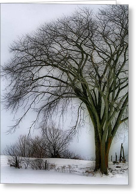 Snow Tree Prints Greeting Cards - Tree Elder Greeting Card by Deborah Benoit