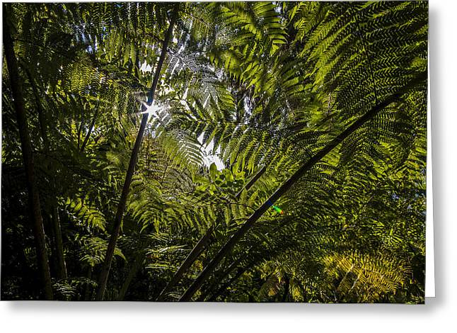Queen Charlotte Sound Greeting Cards - Tree Fern at Queen Charlotte Track Greeting Card by Nigel Forster