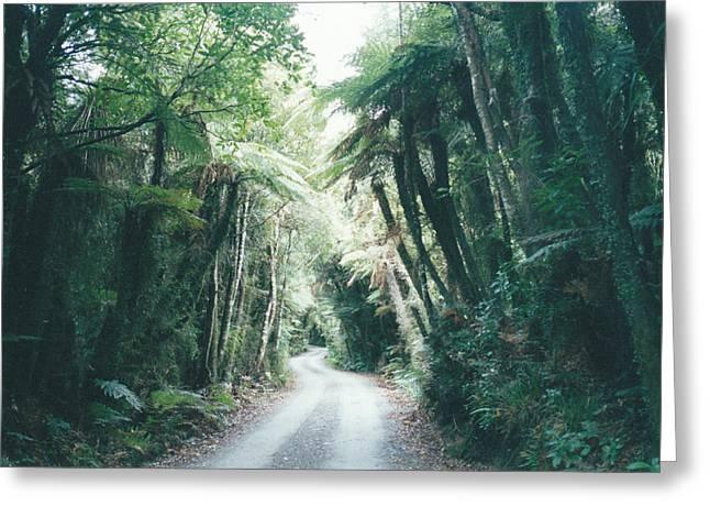 Tree Fern Lane Greeting Card by Christine Rivers