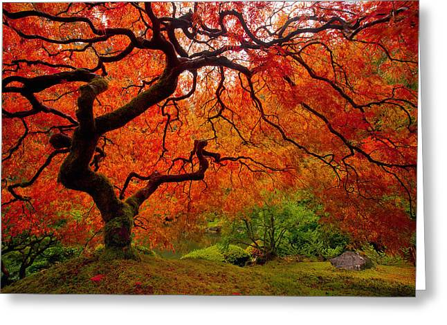 Red Maple Trees Greeting Cards - Tree Fire Greeting Card by Darren  White