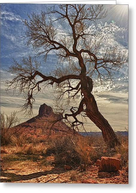 Gnarly Greeting Cards - Tree Frame Greeting Card by Jeff R Clow