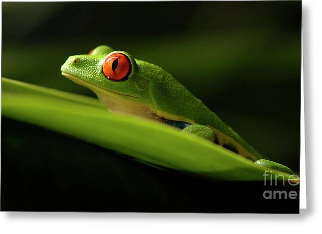 Tree Frog Photographs Greeting Cards - Tree Frog 7 Greeting Card by Bob Christopher