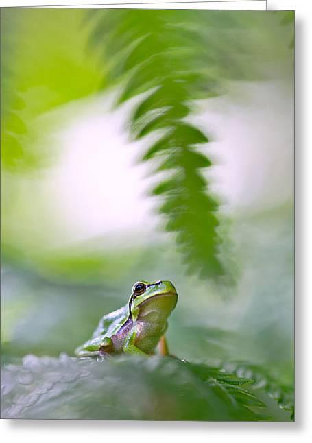 Treefrog Greeting Cards - tree frog Hyla arborea Greeting Card by Dirk Ercken