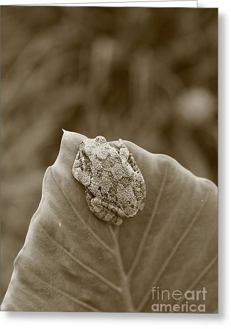 Flying Frog Greeting Cards - Tree frog on a leaf Greeting Card by Dwight Cook